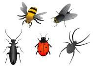 Photo #1: BUG FREE EXTERMINATING CO. Termite & pest control