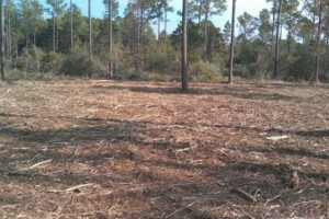 Photo #5: DLC forestry solutions. Land Clearing, Lot Clearing, Tree Removal...