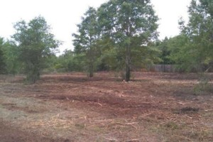 Photo #3: DLC forestry solutions. Land Clearing, Lot Clearing, Tree Removal...