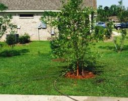 Photo #4: Matts landscaping -weedeating, trimming bushes, mowing...