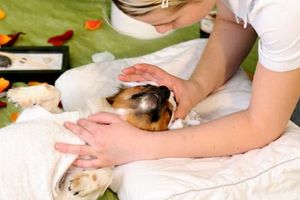 Photo #1: Puppalicious Pet Spa. Small Dog: starting at $35