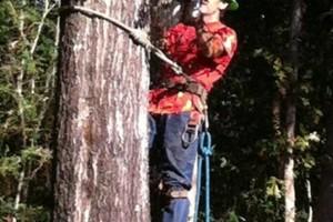 Photo #10: HAMMCO TREE SERVICE