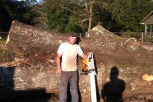 Photo #6: HAMMCO TREE SERVICE