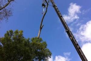 Photo #5: HAMMCO TREE SERVICE