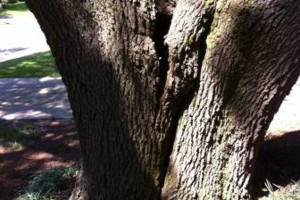 Photo #3: HAMMCO TREE SERVICE