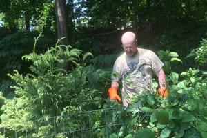 Photo #2: Invasive vine/weed control