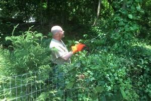 Photo #1: Invasive vine/weed control
