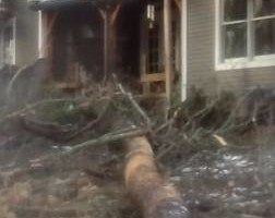 Photo #14: Tree, Irrigation and Landscape services