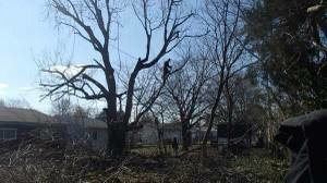 Photo #10: Tree, Irrigation and Landscape services