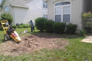 Photo #5: Tree, Irrigation and Landscape services
