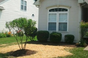 Photo #4: Tree, Irrigation and Landscape services