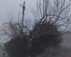 Photo #2: Tree, Irrigation and Landscape services