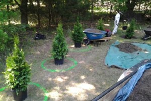 Photo #1: Tree, Irrigation and Landscape services