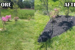 Photo #7: Addor LANDSCAPING / Grass cutting $35- Mulching - Stone beds - Weed and Feed