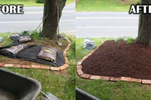 Photo #5: Addor LANDSCAPING / Grass cutting $35- Mulching - Stone beds - Weed and Feed