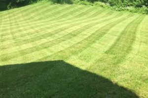 Photo #1: SOTELO LANDSCAPING SERVICE