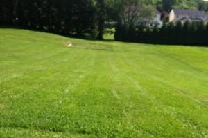 Photo #8: North Star Lawn Care