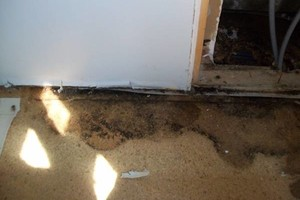 Photo #3: EKLONG - MOLD REMEDIATION AND MORE