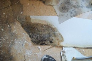 Photo #1: EKLONG - MOLD REMEDIATION AND MORE