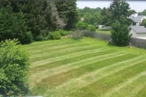 Photo #19: Carefree Lawn Service
