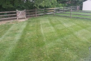 Photo #18: Carefree Lawn Service