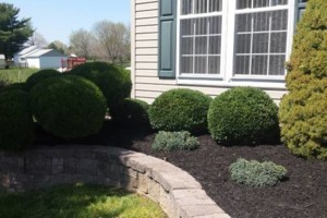 Photo #16: Carefree Lawn Service