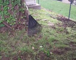 Photo #15: Carefree Lawn Service