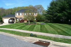 Photo #4: Carefree Lawn Service