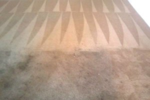Photo #20: Zap Carpet Cleaning