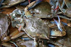 Photo #2: CRABMAN Blue Crabs and Shrimp