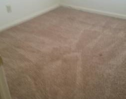 Photo #3: Steam carpet cleaning/water extraction/ water removal...