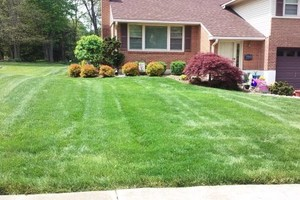 Photo #2: YARD PRO