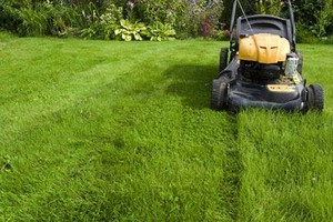 Photo #1: Amazing Service - Kings Lawn Care