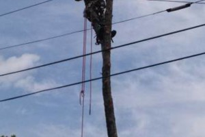 Photo #1: CANDY´S TREE SERVICE. BEST AFFORDABLE PRICES! CALL NOW!