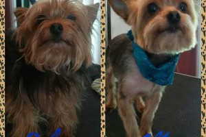 Photo #14: Affordable Dog Grooming