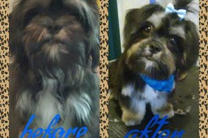 Photo #12: Affordable Dog Grooming