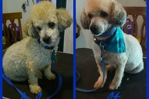 Photo #10: Affordable Dog Grooming