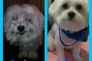 Photo #6: Affordable Dog Grooming