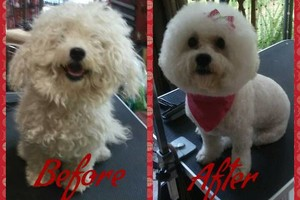 Photo #5: Affordable Dog Grooming