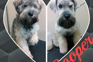Photo #2: Affordable Dog Grooming
