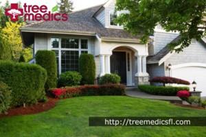 Photo #1: Tree Medics - Tampa Tree Services