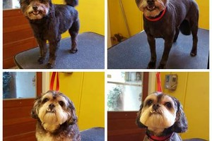 Photo #3: PROFESSIONAL DOG GROOMING
