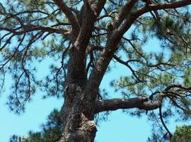 Photo #3: Treeman David