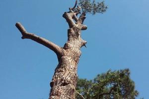 Photo #2: Treeman David