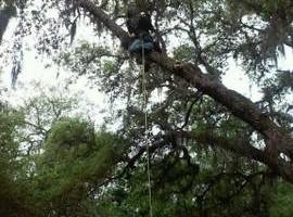 Photo #1: Treeman David