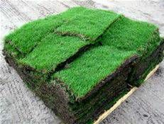 Photo #6: Sod -- Landscaping -- Storm Cleanup