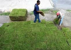 Photo #5: Sod -- Landscaping -- Storm Cleanup
