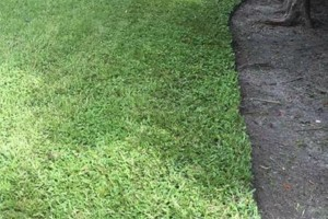 Photo #3: Melendez Landscaping and Lawn maintenance