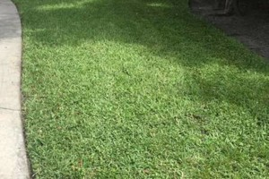 Photo #2: Melendez Landscaping and Lawn maintenance