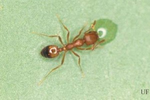 Photo #2: Pest Control, Lawn spraying, Termites - Ed the bug man